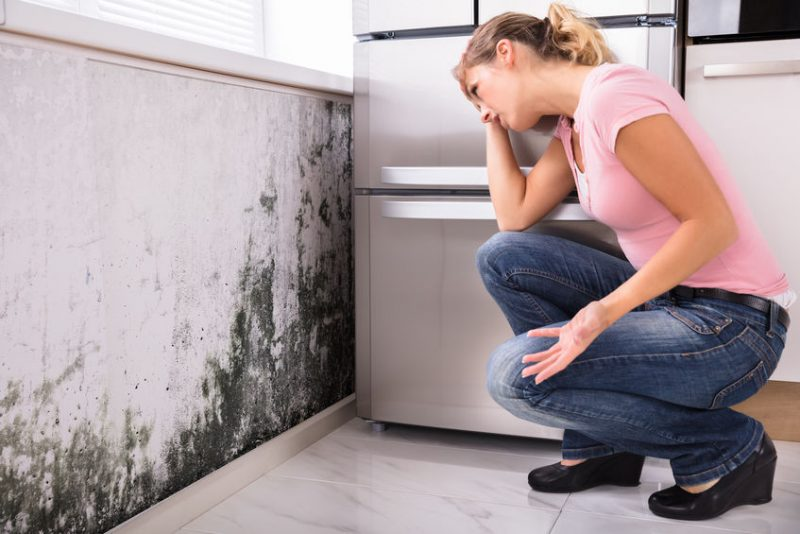 Answering FAQs about Mold in Homes