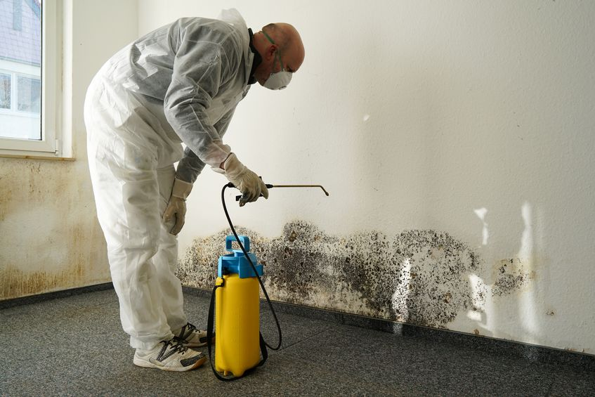 Issues That Mold Remediation and Removal Can Address