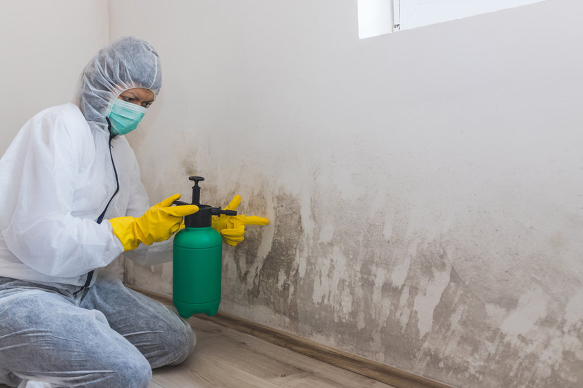 Differences Between Mold Remediation And Removal